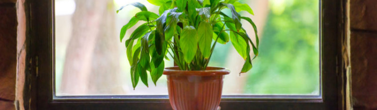 3 Simple Ways to Purify Your Home's Air